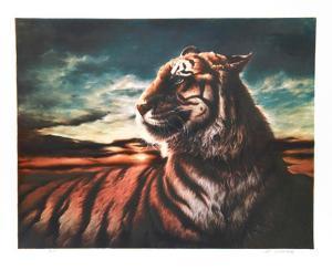 Tiger by Nancy Glazier