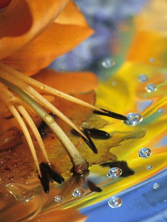 Abstract of Lily Stamens in Reflection