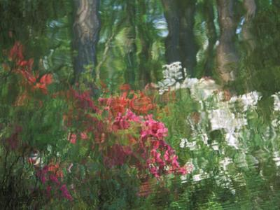 Azalea Reflection in Pond, Georgia, USA by Nancy Rotenberg