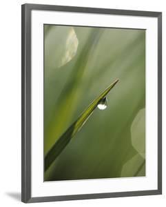 Blade of Grass with Dewdrop by Nancy Rotenberg