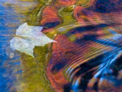 Floating Maple Leaf, Bond Falls, Upper Peninsula, Michigan, USA