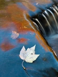 Leaf Floating in Fall Reflections, Bond Falls, Upper Peninsula, Michigan, USA by Nancy Rotenberg