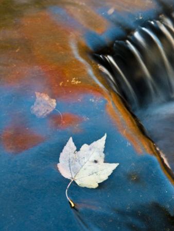 Leaf Floating in Fall Reflections, Bond Falls, Upper Peninsula, Michigan, USA
