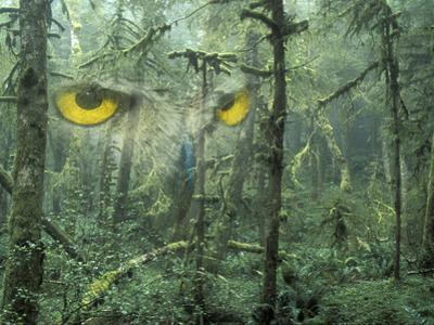 Montage, Owl, Forest, Oregon, USA