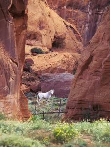 Red Rock, White Horse, White Mountains, Canyon De Chelly, Arizona, USA by Nancy Rotenberg