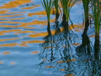 Reflections on Malheur River at Sunset, Oregon, USA