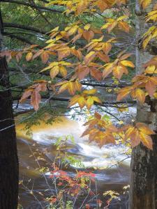Stream and Fall Foliage, New Hampshire, USA by Nancy Rotenberg