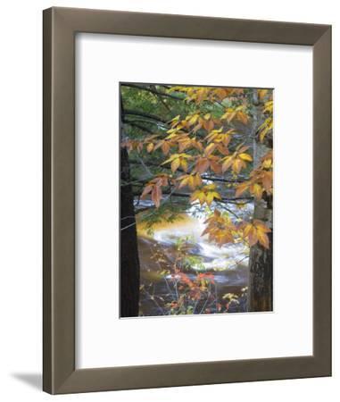 Stream and Fall Foliage, New Hampshire, USA