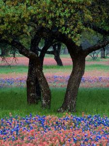 Texas Wildflowers and Dancing Trees, Hill Country, Texas, USA by Nancy Rotenberg