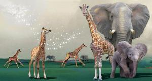 Elephants And Giraffes by Nancy Tillman