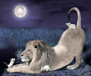Lion And Mice by Nancy Tillman