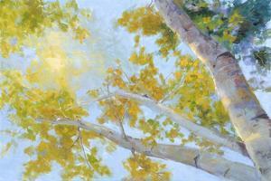 Aspen Canopy by Nanette Oleson