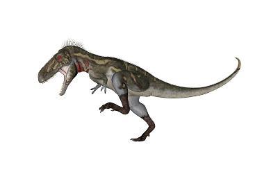 Nanotyrannus Dinosaur Roaring-Stocktrek Images-Art Print