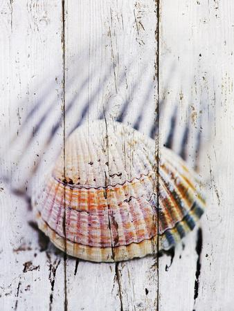 https://imgc.artprintimages.com/img/print/nantucket-shells-ii_u-l-f7tx9m0.jpg?p=0