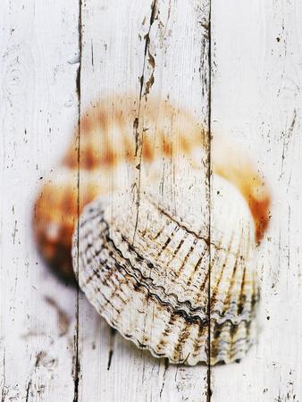 https://imgc.artprintimages.com/img/print/nantucket-shells-iii_u-l-f7tws70.jpg?p=0