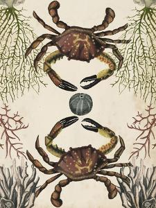 Antiquarian Menagerie - Crab by Naomi McCavitt