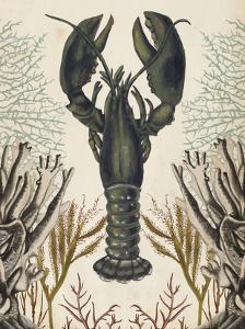 Antiquarian Menagerie - Lobster by Naomi McCavitt