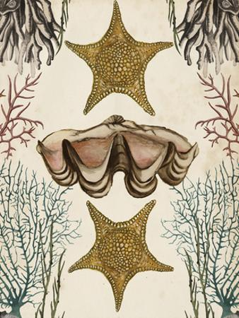 Antiquarian Menagerie - Starfish by Naomi McCavitt