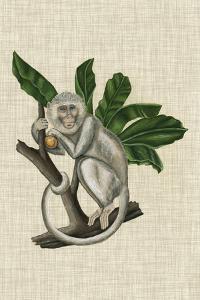 Canopy Monkey II by Naomi McCavitt