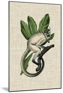 Canopy Monkey IV by Naomi McCavitt