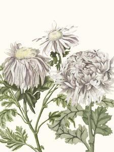 Early Spring Chrysanthemums I by Naomi McCavitt