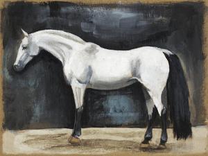 Equestrian Studies VI by Naomi McCavitt