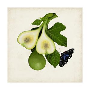 Fruit with Butterflies III by Naomi McCavitt