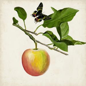 Fruit with Butterflies IV by Naomi McCavitt