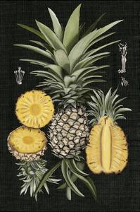 Graphic Pineapple Botanical Study I by Naomi McCavitt