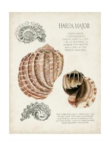 Seashell Field Notes II by Naomi McCavitt