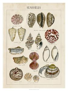 Seashell Sketch I by Naomi McCavitt