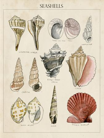 Seashell Sketch II by Naomi McCavitt