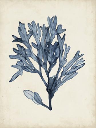 Seaweed Specimens II by Naomi McCavitt