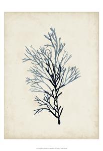Seaweed Specimens IV by Naomi McCavitt