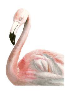 Watercolor Flamingo by Naomi McCavitt
