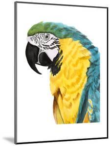 Watercolor Parrot by Naomi McCavitt