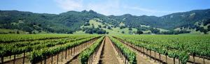 Napa Valley Vineyards Hopland, CA