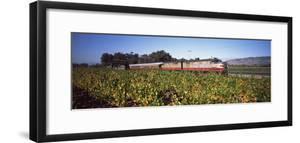 Napa Valley Wine Train Passing Through Vineyards, Napa Valley, California, USA