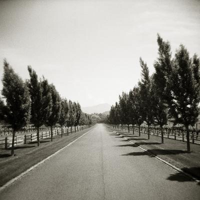 Napa Valley-John Kuss-Photographic Print