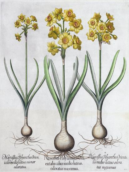 Narcissus, 1613-Unknown-Giclee Print