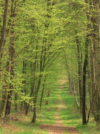 https://imgc.artprintimages.com/img/print/narrow-path-through-the-trees-forest-of-brotonne-near-routout-haute-normandie-france_u-l-p7igpa0.jpg?p=0