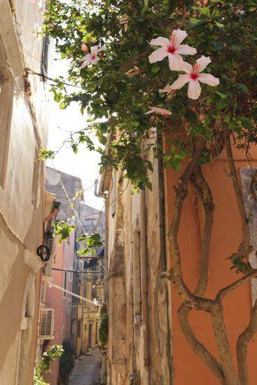 Narrow Street and Hibiscus Flowers, Old Town, Corfu Town-Eleanor Scriven-Photographic Print