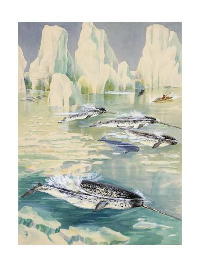 Narwhal Whales are Being Hunted by Eskimos-Else Bostelmann-Giclee Print