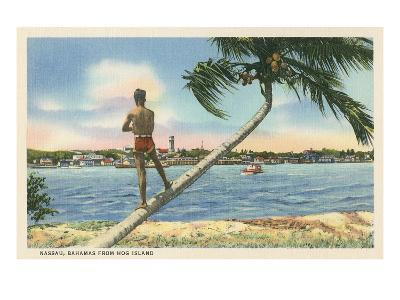 Nassau, Bahamas, Hog Island--Art Print