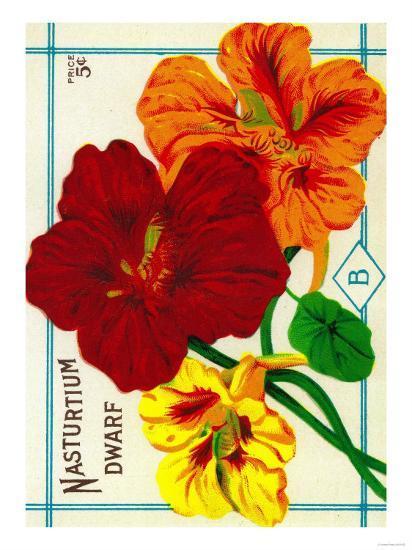 Nasturtium Seed Packet-Lantern Press-Art Print
