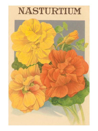 Nasturtium Seed Packet--Art Print
