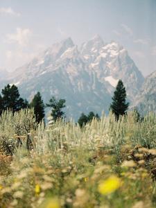 Grand Teton by Natalie Allen