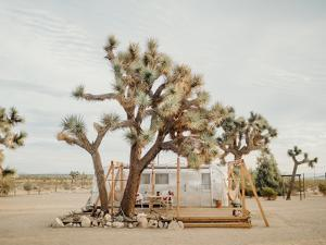 Joshua Tree Acres by Natalie Allen