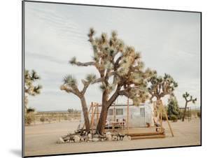 Joshua Tree Acres by Natalie Allen