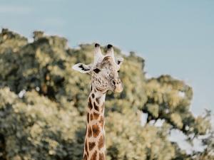 Zambia by Natalie Allen